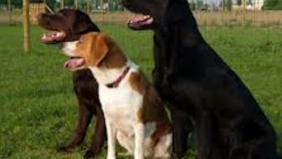 Cassazione: lesioni colpose per il padrone se i cani scappano dal cancello aggredendo passante